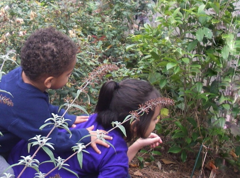 Discovering butterfly chrysalis