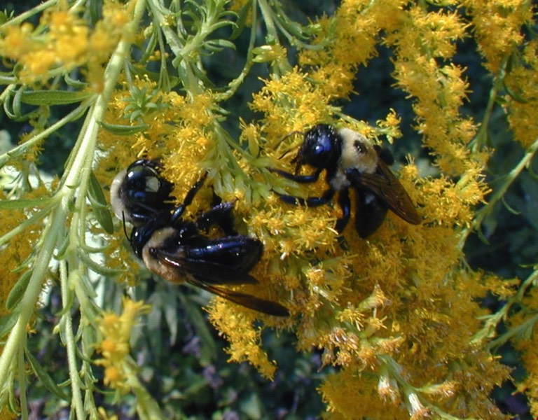 Pollinators Beneficial insects sustainable native plants