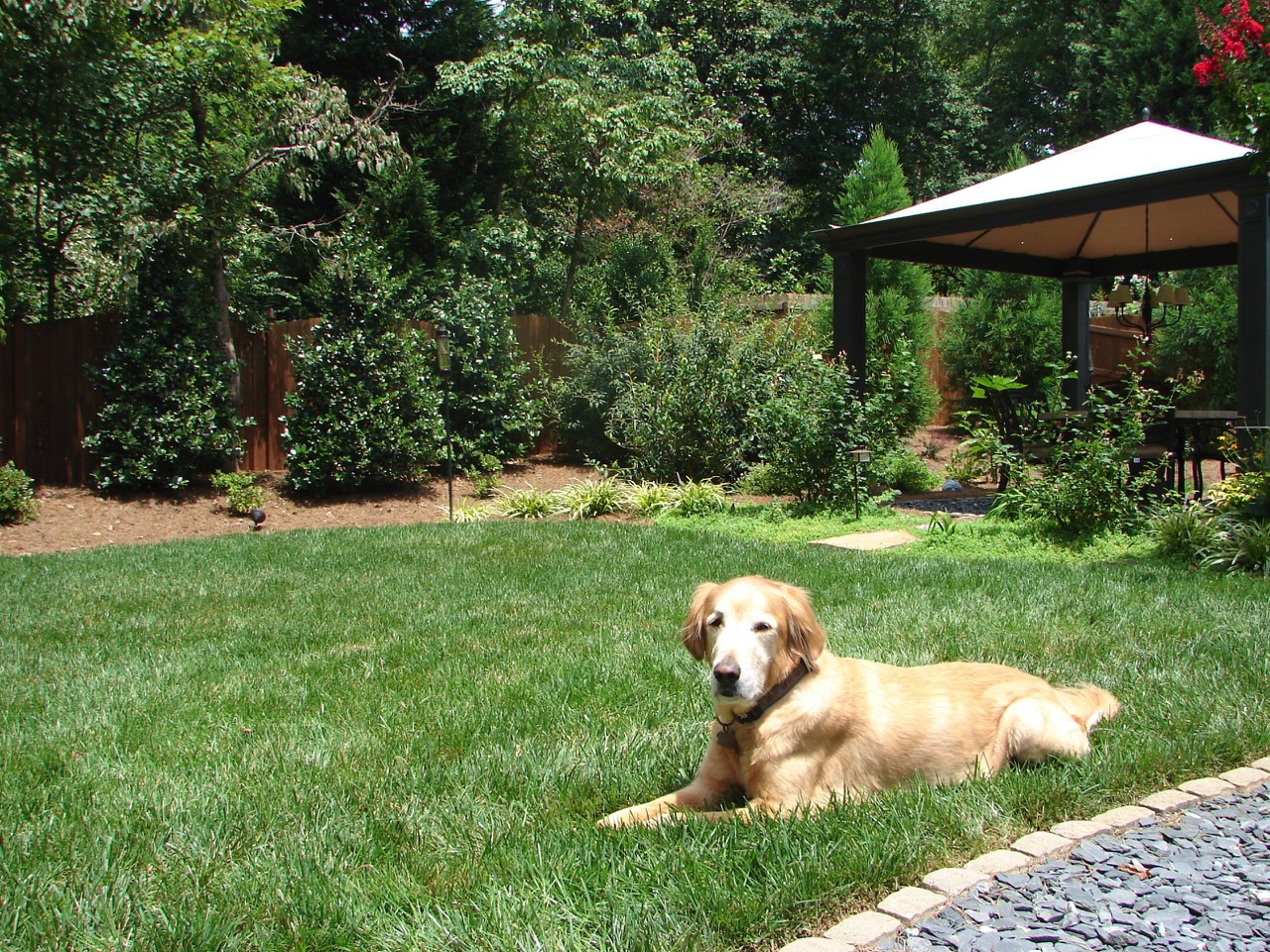 Pet safe pesticide free organic lawn