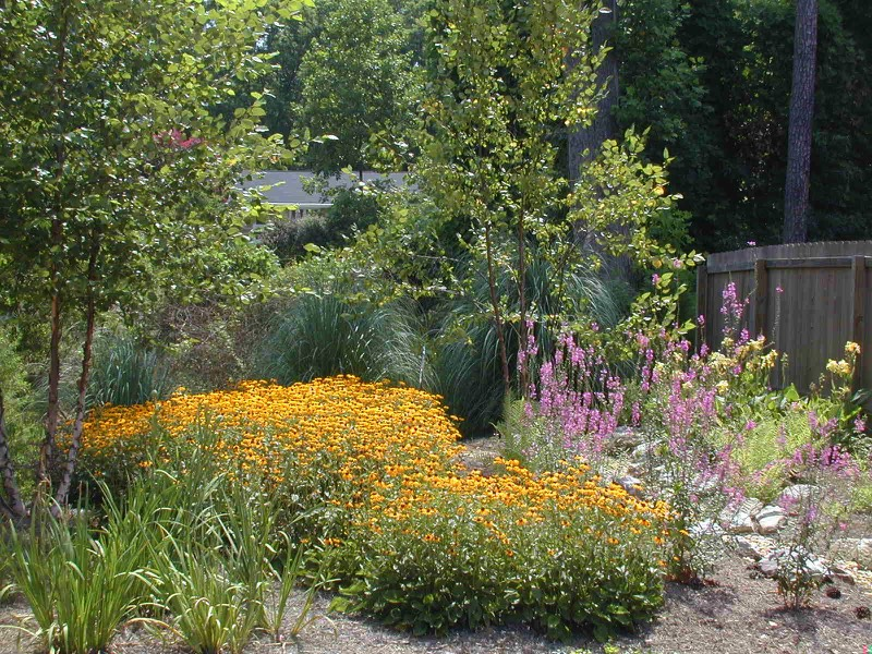 eco friendly rain garden wildlife habitat - Garden Drainage