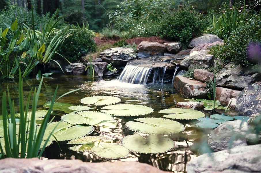 Tranquil waterfall lily pond