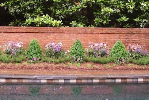 Clipped formal border with perennials