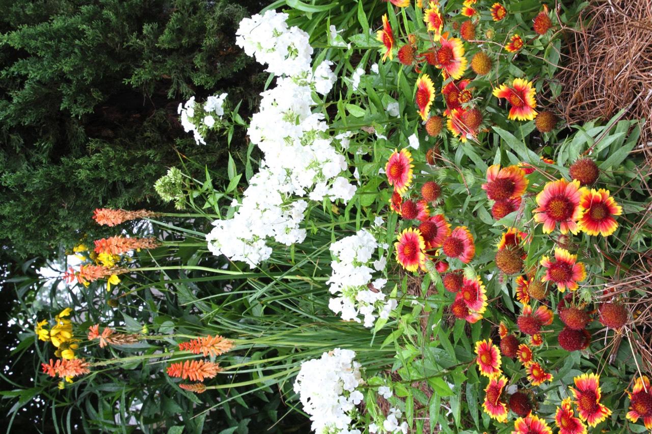 Perennials cutting gardens for Best flowers for cutting garden