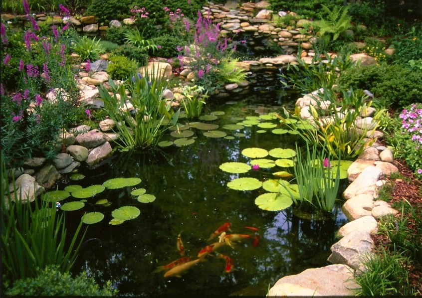 koi pond large natural