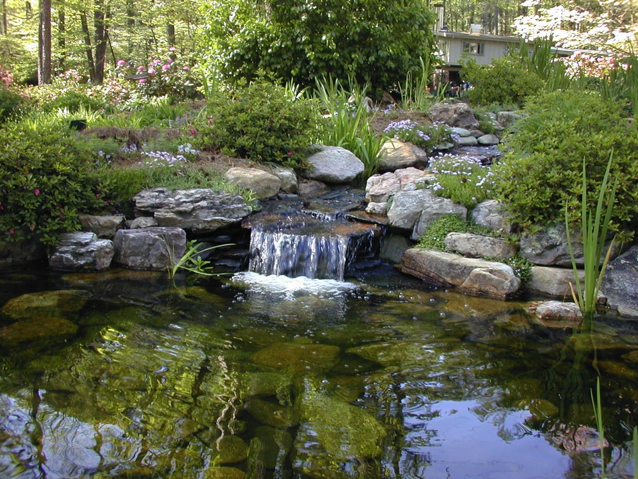 Ponds water features for Water pond design
