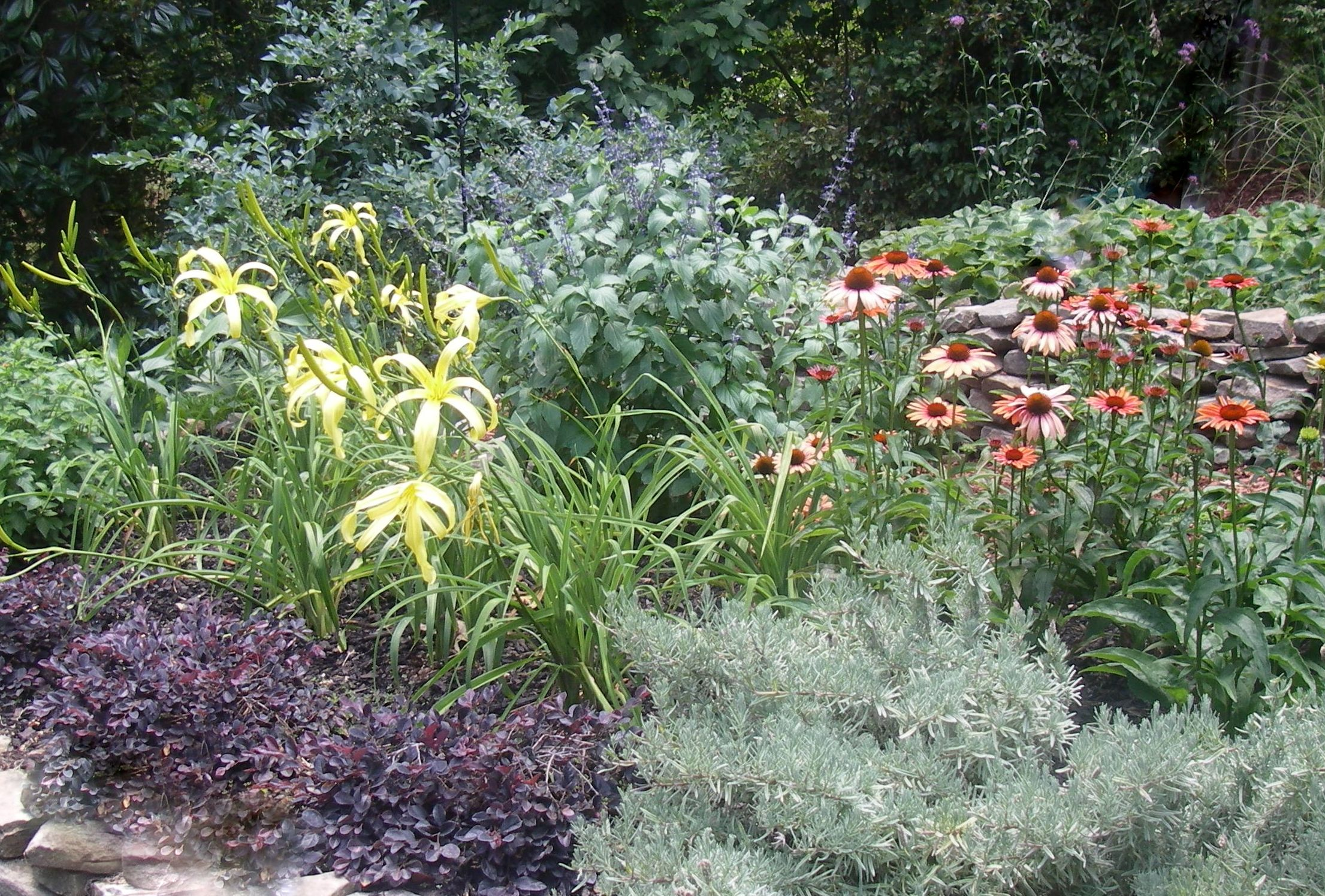 water wise garden designs. Water wise perennial garden drought tolerant Sanctuary gardens designed specifically to be your unique outdoor