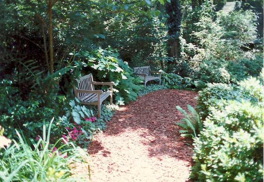 Shady side yard woodland