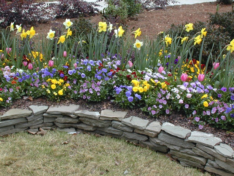 Low Dry Stack Thin Stone Wall Border Annual Bed