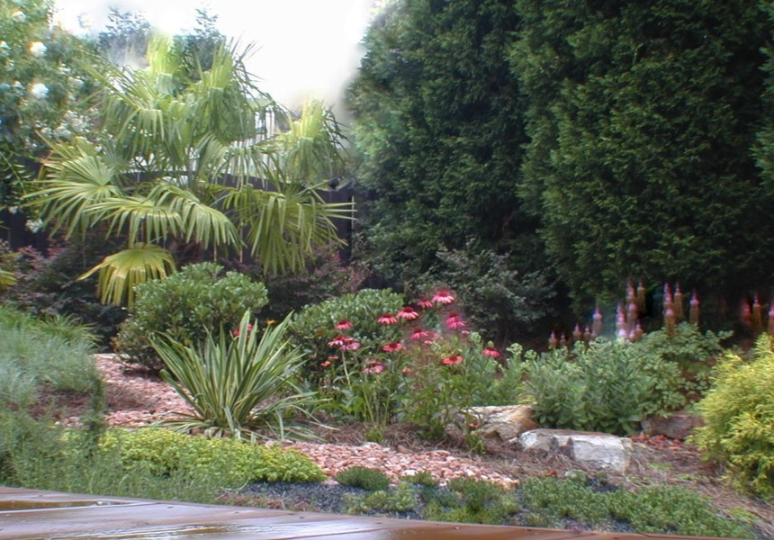 Tropical drought tolerant xeriscape