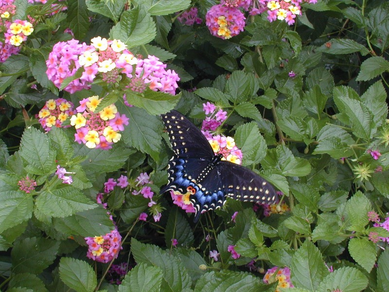 eco friendly landscapes drought tolerant butterfly gardens sustainable
